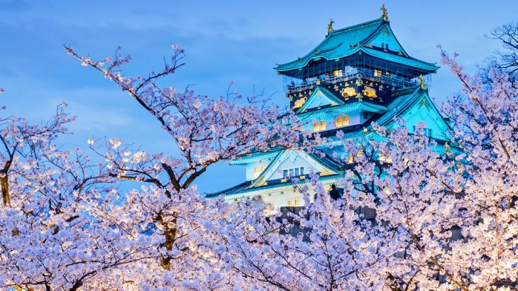 Japan's Cherry Blossoms