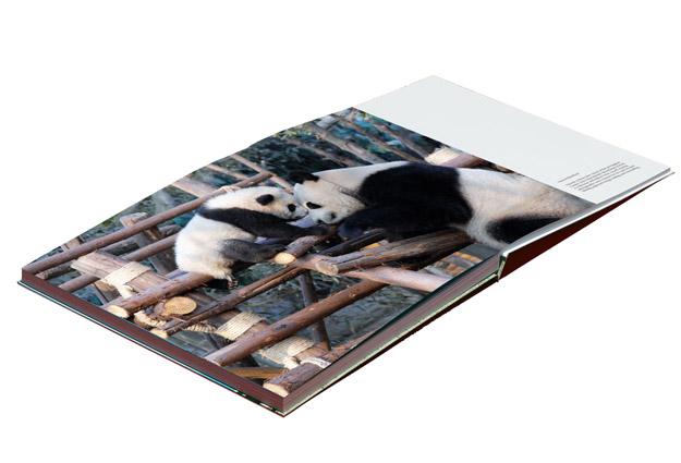 holiday photo book