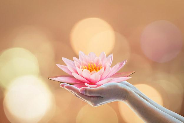cambodian flower