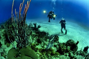 scuba diving in vietnam