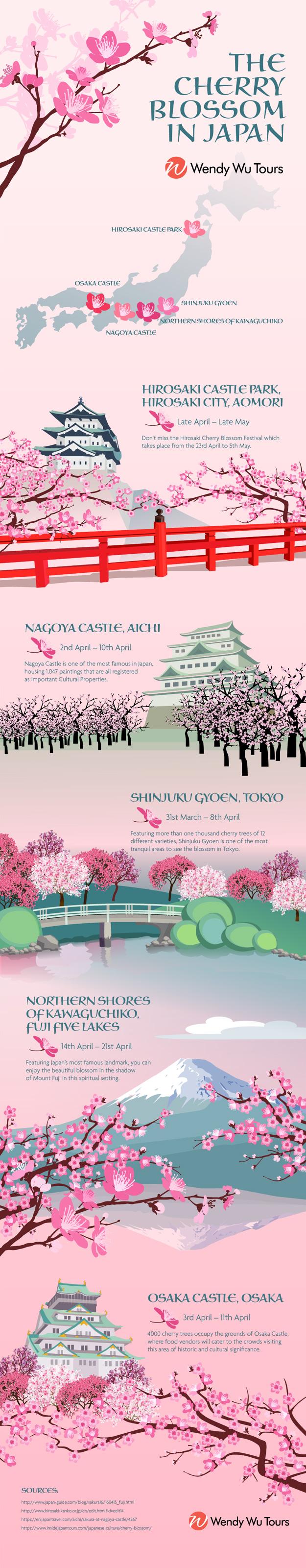 cherry blossom infographic