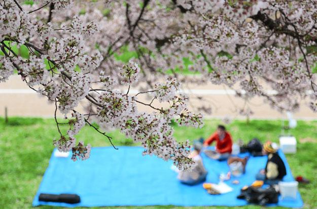 Hanami in a park