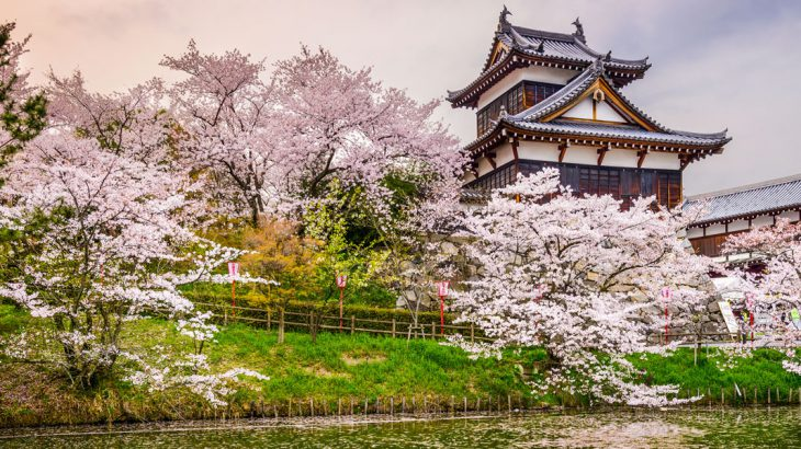 japanese-castle-sakura