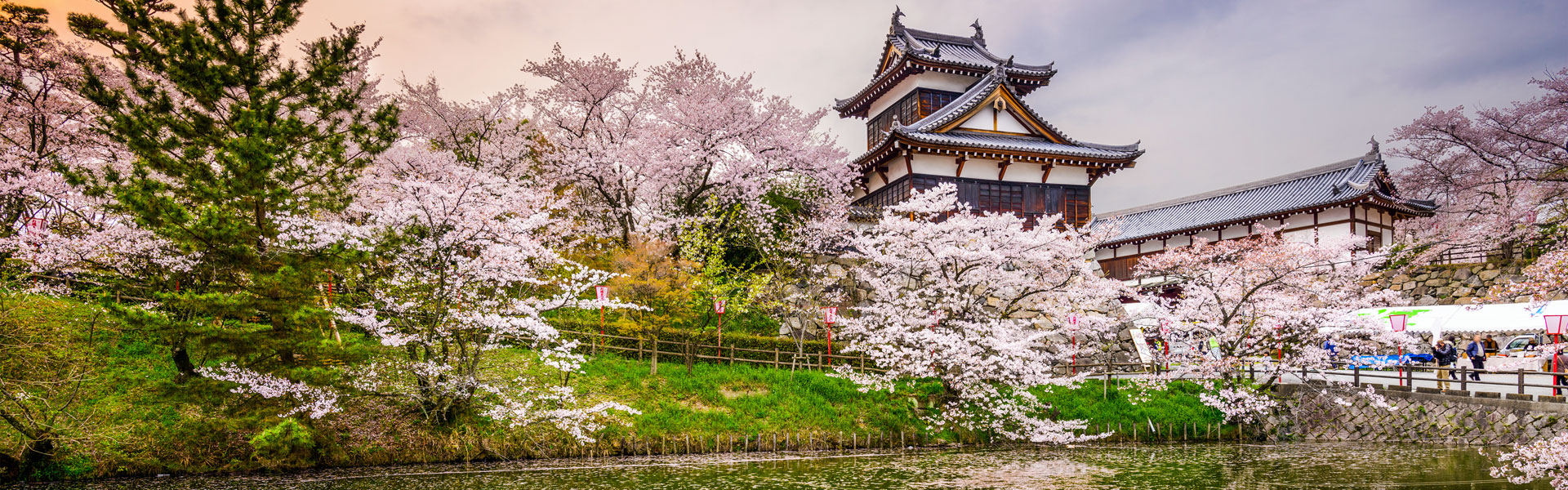 japanese-castle-sakura