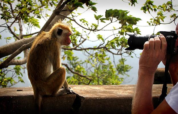 Taking wildlife photo