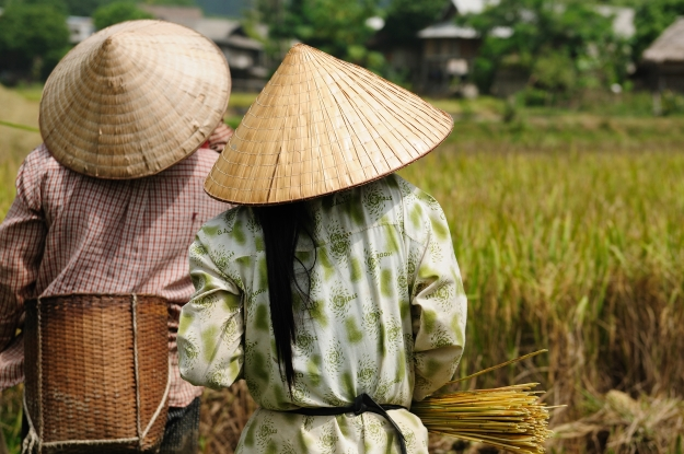 Vietnamese rice farmers