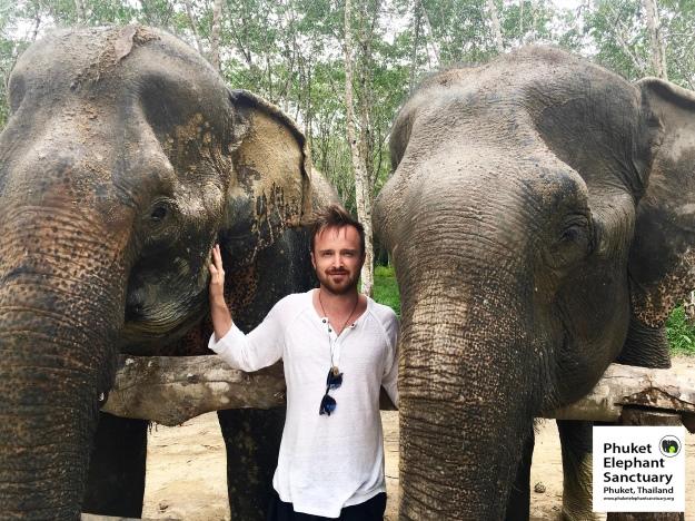 Actor Aaron Paul visiting Phuket Elephant Sanctuary