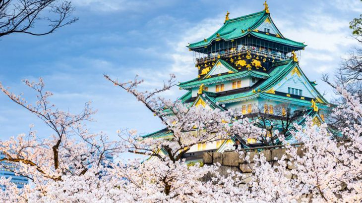 Cherry blossoms around Osaka Castle.