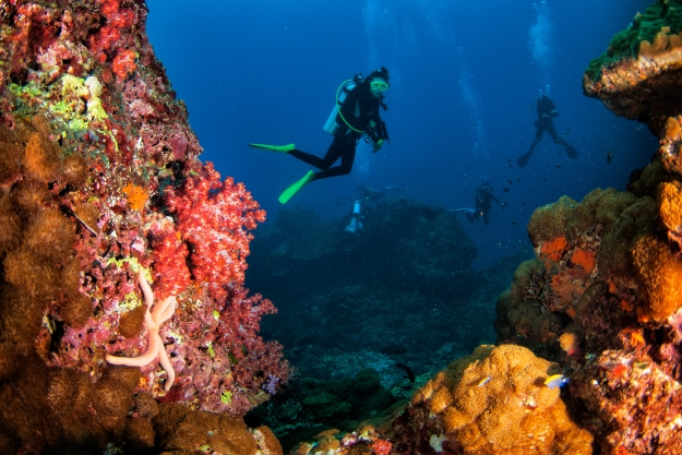 Scuba diving in Andaman Islands