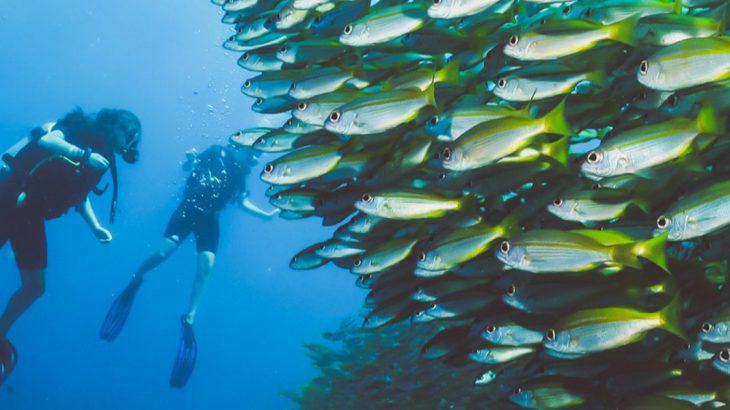 Scuba diving in Asia