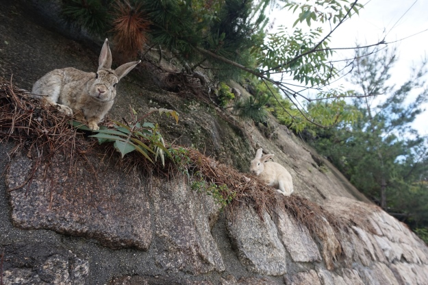 Okunoshima Island in Japan