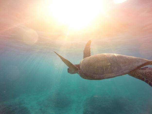 Turtle in Monad Shoal