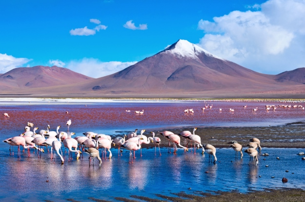 Flamingos in the Atacama Desert
