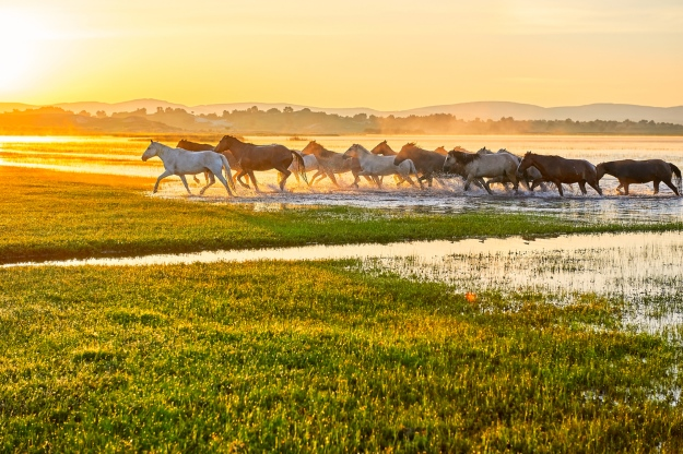 Horses running through China's grasslands