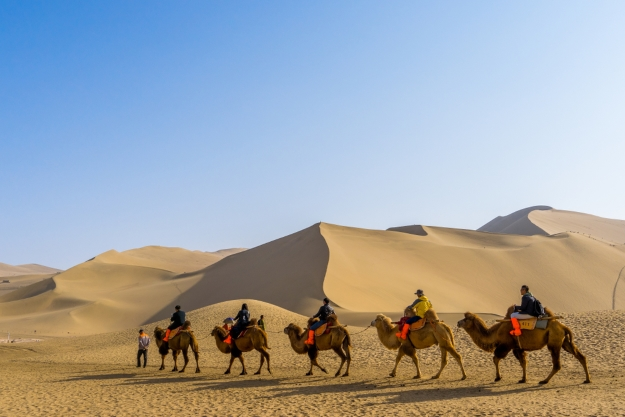 Camels travelling through the Gobi Desert