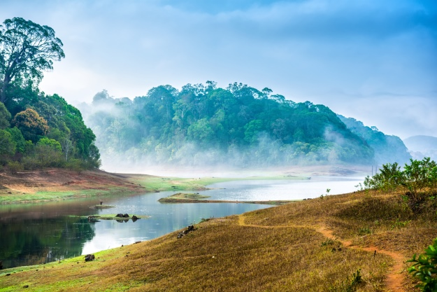 Misty forests in Periyar National Park