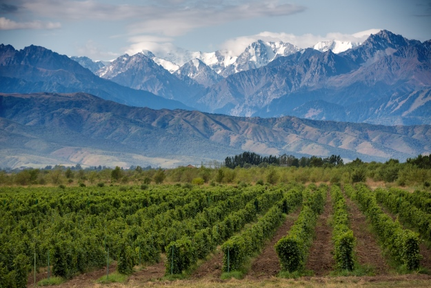 The vineyards and mountains of Mendoza