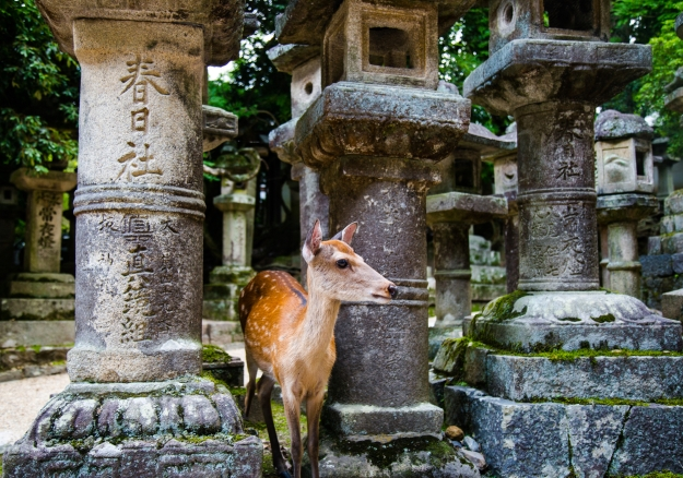 A Sika deer at a temple in Nara