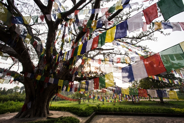 Prayer flags strung through the trees of Lumbini