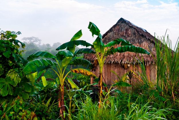 A thatched hut in the rainforest