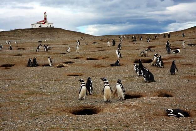 Penguins on an island with lighthouse