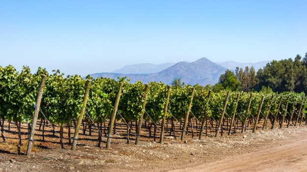 Vineyards in Chile in the sunshine