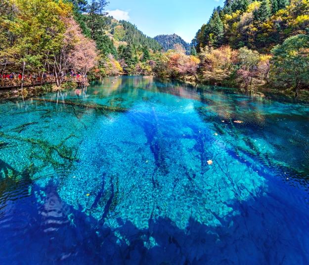 A vivid blue and crystal clear lake in Jiuzhaigou National Park
