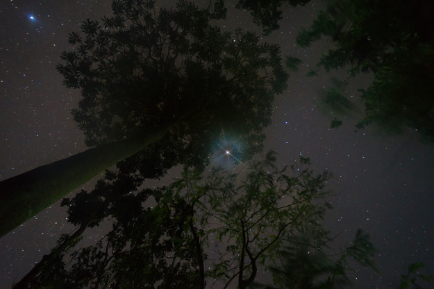 Shot of a starry sky up through the trees.