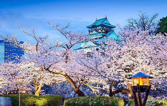 Japan Local Tour Company