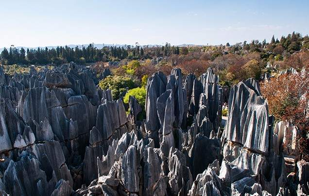 Day 11 Visit the Stone Forest