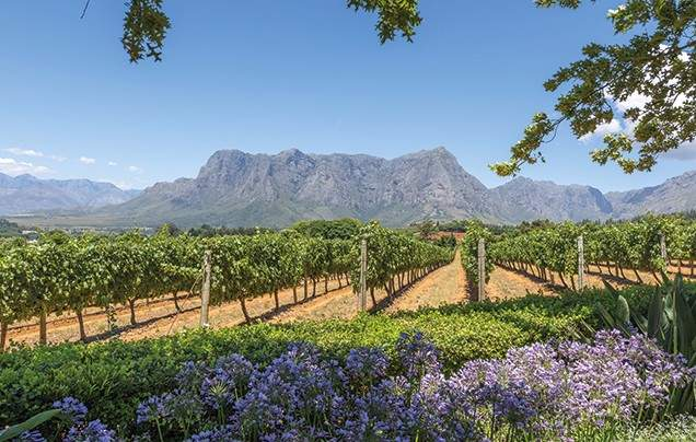Day 16: Cape Winelands Tour