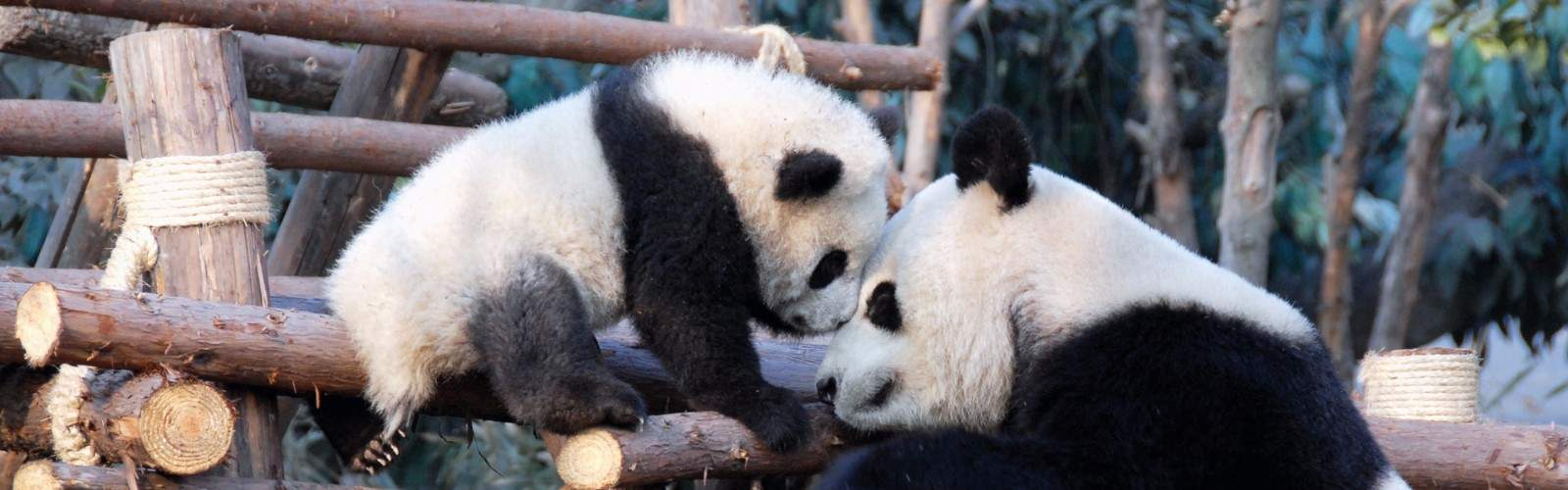 Family Panda Adventure Tour | Wendy Wu Tours