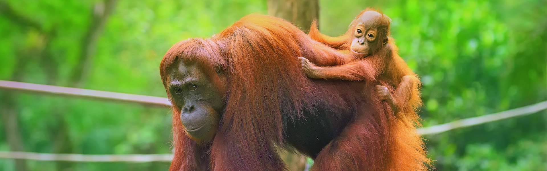 Into the True Heart of Borneo Tour | Wendy Wu Tours