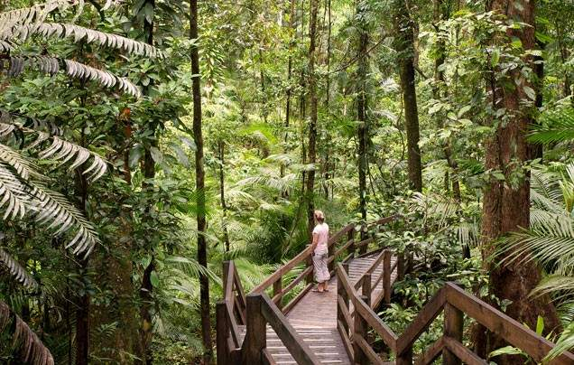 Day 18 Daintree and Mossman Gorge