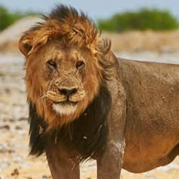 Namibia: Wildlife & Wilderness Tour