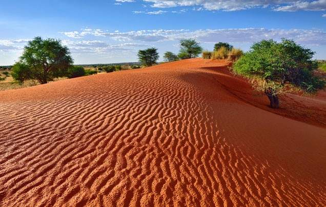 Day 3 Discover the Kalahari Desert