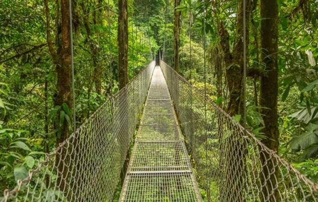 Day 7 Mistico Park Hanging Bridges