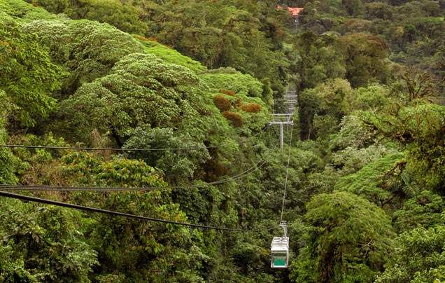 Day 14 Rainforest Aerial Tram