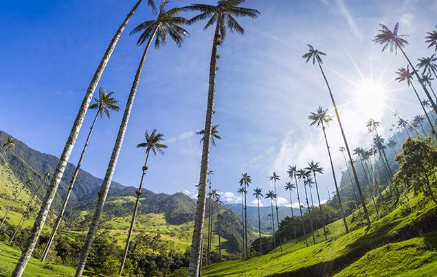 DAY 14: COCORA VALLEY