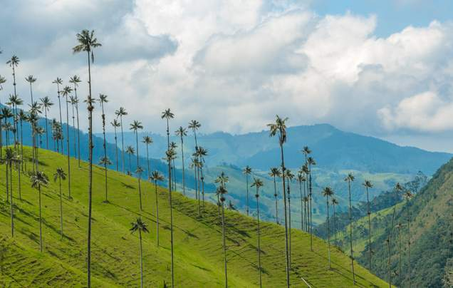 DAY 7: COCORA VALLEY
