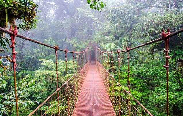 DAY 5: MONTEVERDE CLOUD FOREST RESERVE