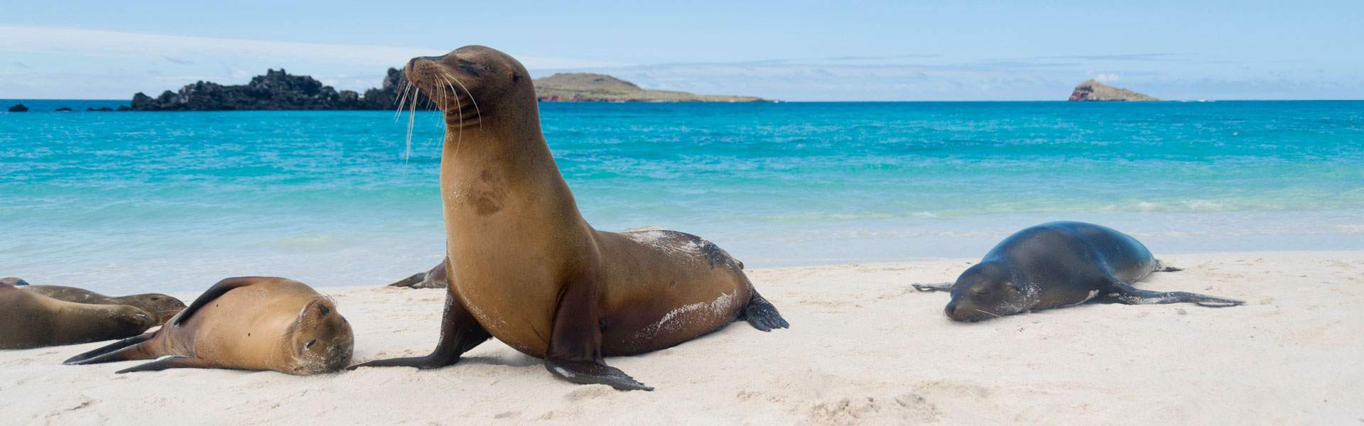 Ecuador and The Galapagos Holidays