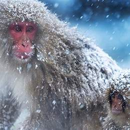 Sapporo & Snow Monkeys Private Tour tour