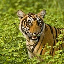Ranthambore Short Stay Tour