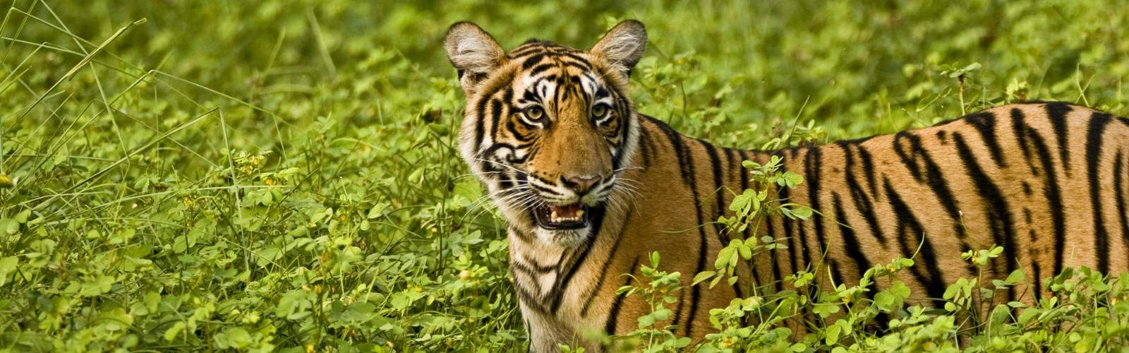 Ranthambore Short Stay Tour | Wendy Wu Tours