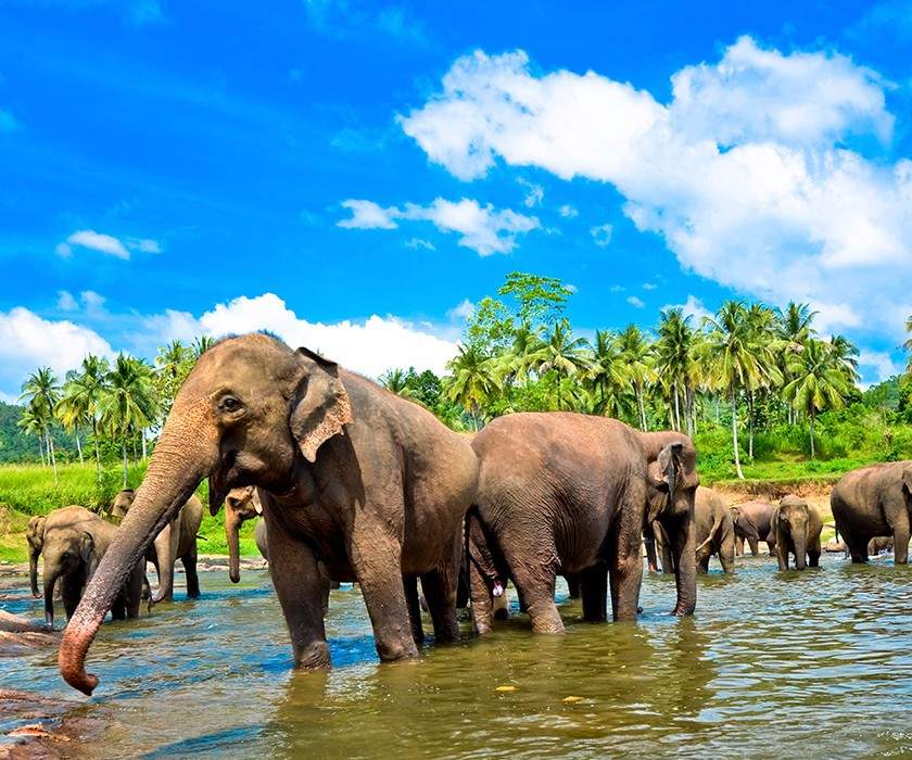 Sri Lanka at a Glance Tour