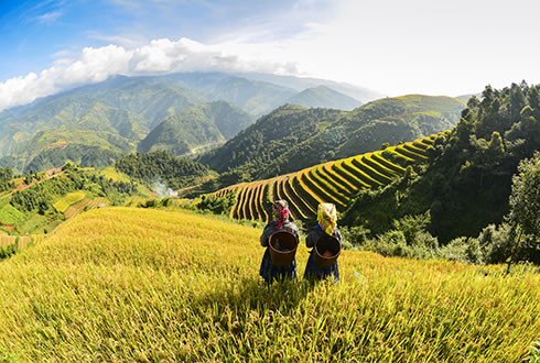 Vietnam Trails Tour Tour